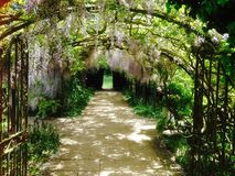 Wisteria Arch at Hampton Court Castle, Leominster. Wisteria Grown around arch in beautiful gardens at Hampton Court Castle in Herefordshire Stock Images