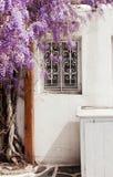Wisteria blooms bush near window. Typical of Greece. Mykonos. Stock Images