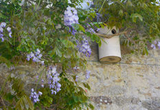 Wisteria blossom and birdhouse Royalty Free Stock Images