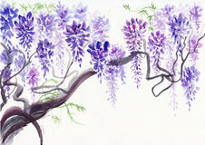 Wisteria blossom. Original watercolor painting of beautiful wisteria branches in blossom vector illustration