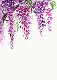 Wisteria blossom. Original watercolor painting of beautiful wisteria branches in blossom royalty free illustration