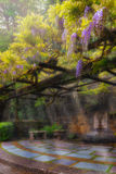 Wisteria Flowers Blooming on Trellis over Water Fountain Royalty Free Stock Photo