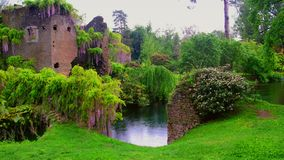 Wisteria flowers in 4k fairy castle garden of ninfa in Italy - medieval tower ruin surrounded by river under rain