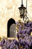 Wisteria flowers. Photo in Asolo (Italy). Asolo, considered one of the most beautiful villages in Italy, is in the province of Treviso in the Veneto Stock Images