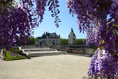 Chateau de Chenonceau, France. Wisteria Flowers up the facade of a cottage at the Chateau de Chenonceau, France stock photos