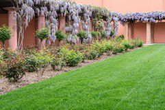 Wisteria in a vineyard courtyard Stock Images