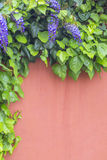 Wisteria and green leaves on the red wall at exterior as background. Wisteria and green leaves on the red wall at exterior Stock Photography