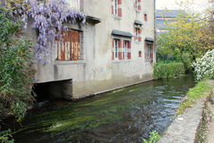 Wisteria is growing along the facade of a house built at the edge of a stream in Pont-Aven (France). Wisteria is growing along the facade of a house built at the royalty free stock photo