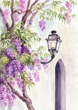 Wisteria and lantern Royalty Free Stock Photos