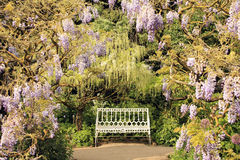 Wisteria Lined Garden Bench Royalty Free Stock Image