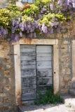 Wisteria op de voordeur van het oude huis Stock Foto