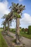 Wisteria op Latwerk royalty-vrije stock afbeelding
