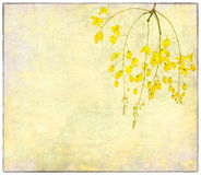 Wisteria painted on old paper Stock Photography