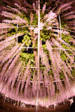 Wisteria park Royalty Free Stock Photography