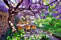 Wisteria on a restaurant terrace. Wisteria sinensis and green plants on a restaurant terrace Royalty Free Stock Images