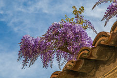 Wisteria on the roof Stock Photography