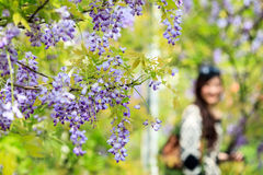 Wisteria trellis. great views of Taiwan Royalty Free Stock Photos