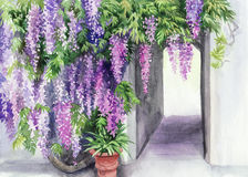 Wisteriablomning royaltyfri illustrationer