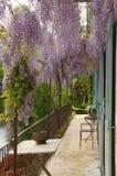Wisteriaen blommar över balkong Arkivbilder