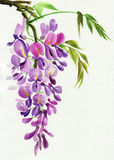 Wisteriafilial royaltyfri illustrationer