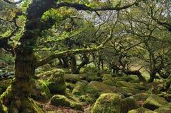 Wistman drewno w Dartmoor, Zjednoczone Królestwo Fotografia Royalty Free