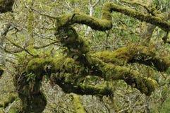 Wistman's Wood Stock Photo