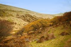 Wistmans-Holz Dartmoor Nationalpark devon Großbritannien lizenzfreie stockbilder
