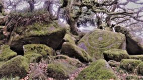 Wistmans-Holz in Devon - der Stein des Druiden? stockbild