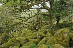 Wistmans trä Arkivbild