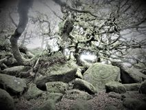 Wistmans wood in Devon - the druid`s stone?. Famously spooky and mysterious woodland where boulders and ancient oaks live tangled together.  It is said that it royalty free stock images
