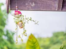 Wiszący flowerpot z rozmytym natury tłem Zdjęcia Royalty Free