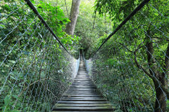 Wiszący most w lesie tropikalnym, Gwatemala obrazy stock