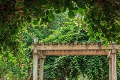 wiszący winogrady r na drewnianej ogrodowej ramie zdjęcie royalty free
