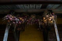 wiszące cebule Zdjęcie Royalty Free