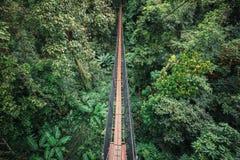 Wiszącego mosta inside wiecznozielony las Obrazy Royalty Free