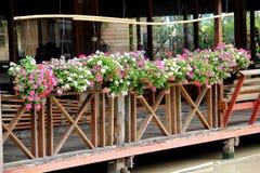 Wiszący kwiatów garnki Zdjęcia Stock
