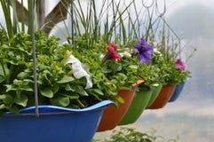 wiszący kwiatów garnki Fotografia Stock