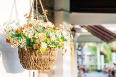 Wiszący kwiatu garnek Zdjęcie Stock