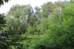Wiszący most, krajobraz, drzewa, natura fotografia stock
