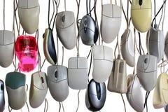 Wiszące komputerowe myszy odizolowywać na białym tle Fotografia Royalty Free