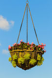 Wiszący kosz kwiaty Obraz Stock