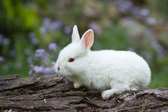 Wit baby wit konijn op boomstam royalty-vrije stock afbeelding