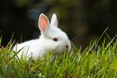 Wit babykonijn in gras stock afbeeldingen