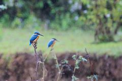 Wit-bekroond hornbill royalty-vrije stock foto
