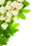 Wit bloemen hoekig verticaal frame. Royalty-vrije Stock Afbeeldingen