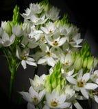 Wit bloemenboeket stock foto