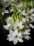 Wit bloemenboeket stock afbeeldingen