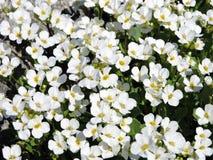 Wit bloemenpatroon Royalty-vrije Stock Afbeelding