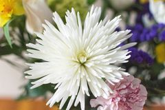 Wit bloemroze Stock Foto's