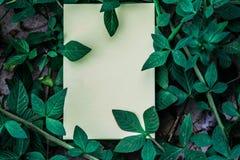 Wit boek met groen blad Royalty-vrije Stock Fotografie